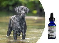Flower essences that support your dog's ability to maintain energy and focus