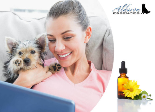 Flower essences for dogs: custom Bach flower essence formulas tailored specifically to your dog's needs.