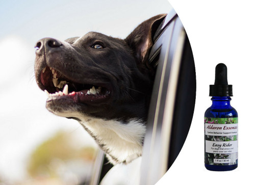 Easy Rider flower essence blend for car travel. Soothes stress, anxiety and disorientation and restores composure.