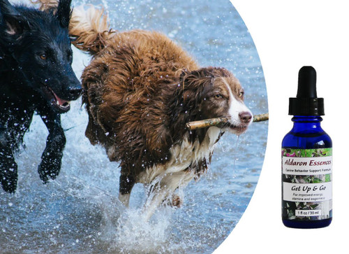 Flower essences for dogs:improve energy, stamina, and eagerness.