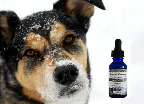 Renew flower essence formula for dogs: for depressed, shut down, defensive dogs recovering from abuse, neglect, trauma