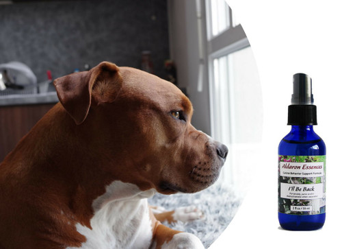 Flower Essences for separation anxiety in dogs