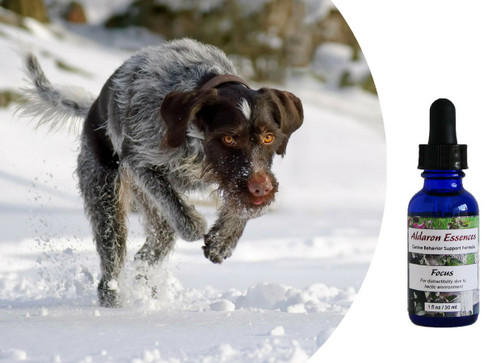 Flower essences for dogs: improve focus, reduce distraction