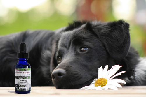 Flower Essences for Dogs: Tips for Success