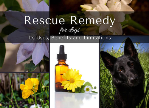 Bach Rescue Remedy for Dogs: Uses and Limitations