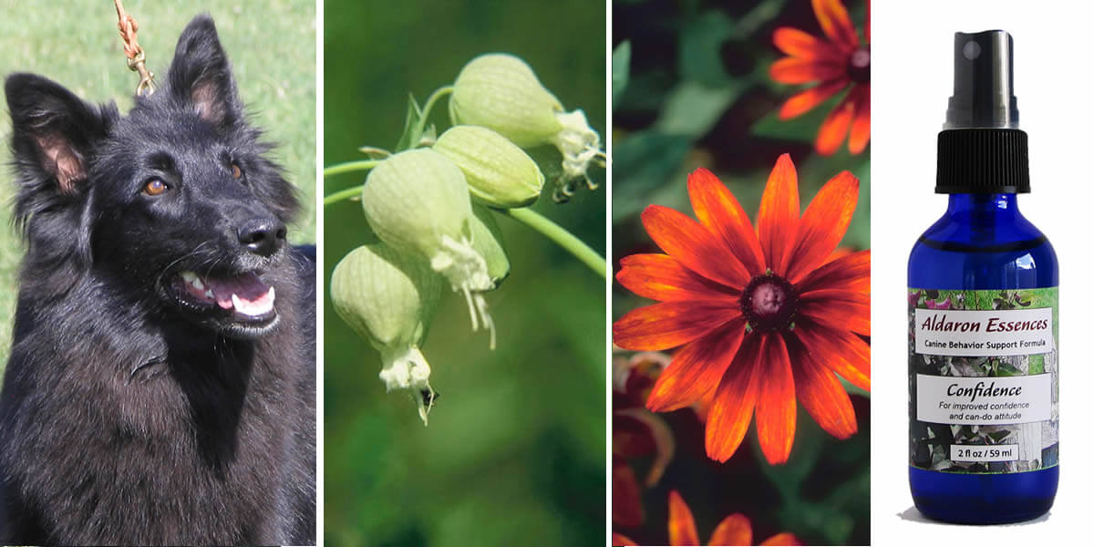 Bach flower remedies for dogs: Aldaron Essences