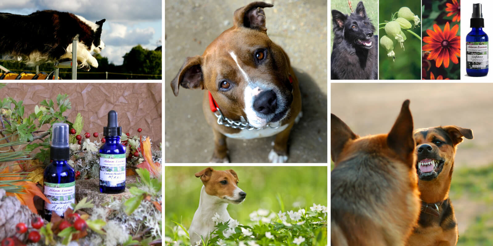 Flower essences for dogs. Safe, gentle, effective.