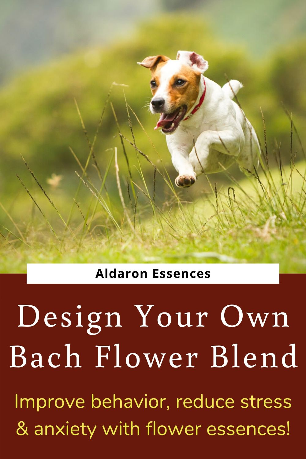 bach-flower-remedies-for-dogs-design-your-own-aldaron-essences-1-.jpg