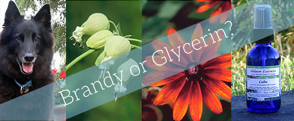 brandy or glycerin