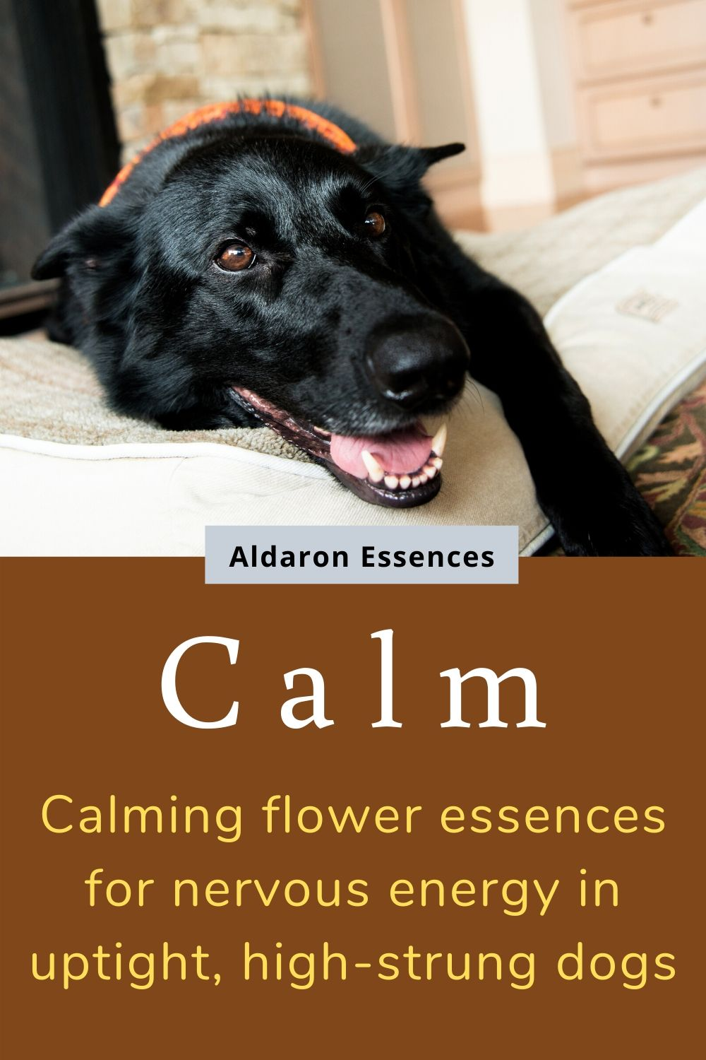 calm-flower-remedies-for-high-strung-dogs-aldaron-essences.jpg