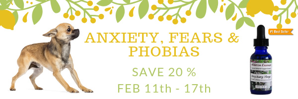 Anxiety, Fears and Phobias formulas - save 20%