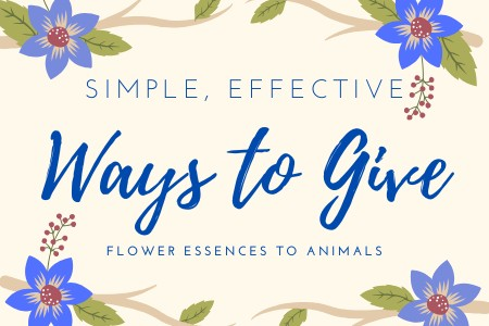 Simple, Effective Ways to Give Flower Remedies to Animals