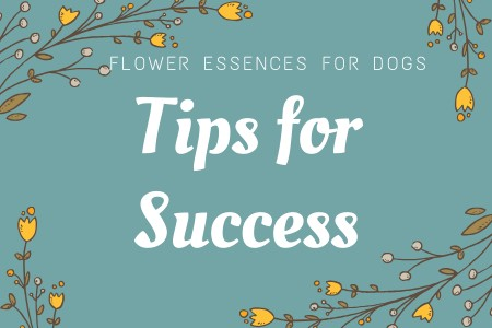 Flower Remedies for Dogs: Tips for Success