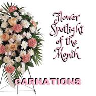 January Flower Spotlight - The Carnation