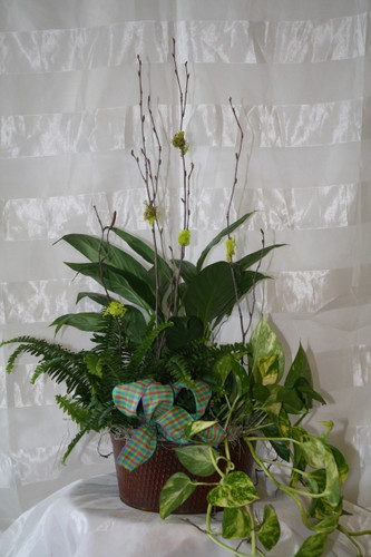 Green Trio English Planter Garden by Enchanted Florist - Green plants in a metal container. Delivery available in Webster TX and surrounding areas. RM432