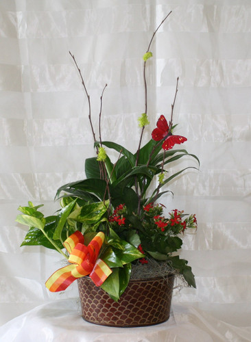 Blooming English Garden by Enchanted Florist - Cute blooming garden for small table or hospital. Delivery available to League City Texas 77573 and surrounding areas. RM433