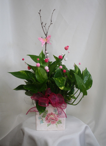 Perfectly Planted Pothos Ivy in Pink & Green Floral Cube from Enchanted Florist. This pothos ivy green plant includes the pretty pink decorations, pink butterfly, and is hand delivered in the ceramic container for a perfect gift. SKU RM402
