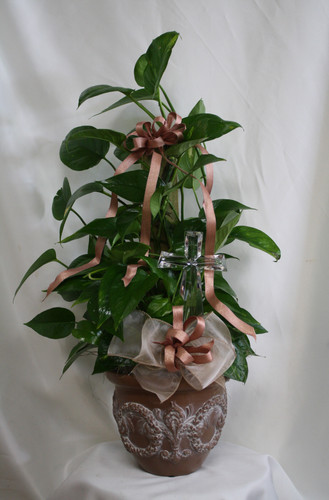 "Pole Ivy Funeral Plant with Crystal Cross from Enchanted Florist. This lush green pole ivy arrives in our exclusive Classical Gardens container and includes a beautiful 7"" crystal cross for the family to keep. Approximately 24""H x 12""W SKU RM453"