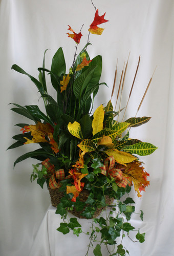 "Fall Croton European Triple Basket of Plants from Enchanted Florist. A beautiful triple basket of fall themed plants and decor. The basket of plants will include a fall croton and two green plants decorated with fall ribbons, mini cattails and fall leaves. Approximately 26""H x 20""W SKU RM462"