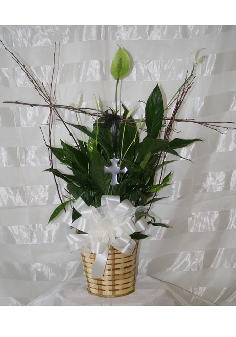 Peace Lily Prayer Green Plant with Silver Cross, an exclusive item from Enchanted Florist Pasadena TX. A beautiful long green leaf potted plant with birch wood branches in an armature and a silver cross hanging from the branches. Please visit our blog for more information on how to care for you closet plant. RM440