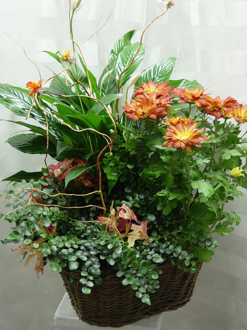 Grand European Blooming Garden by Enchanted Florist - funeral plants for the home. Blooming garden can be delivered to the family's home address after the funeral. RM410