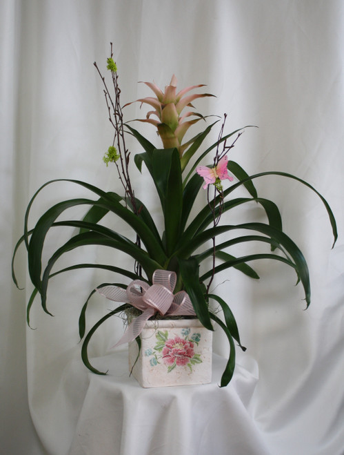 """Pink Ceramic Cube with Tropical Bromeliad from Enchanted Florist. This beautifully unique tropical plant bromeliad will arrive in a lovely ceramic cube with a pink rose on the front. Color of the bromeliad will vary, but will match the container. Approximately 24""""H x 22""""W SKU RM454"""