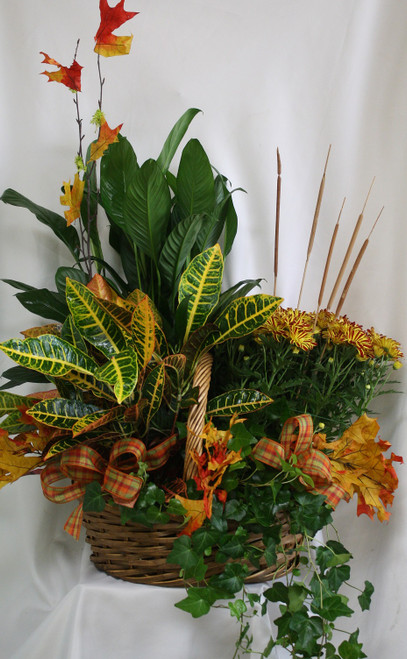 """Autumn Arrival European Garden with Four Plants from Enchanted Florist. A large fall basket of plants makes the perfect gift for a friend or to send for a funeral. The basket of plants will include a fall croton, a fall mum plant, and two green plants arranged in a basket and decorated with autumn ribbons and fall leaves. Approximately 28""""H x 26""""W  SKU RM459"""