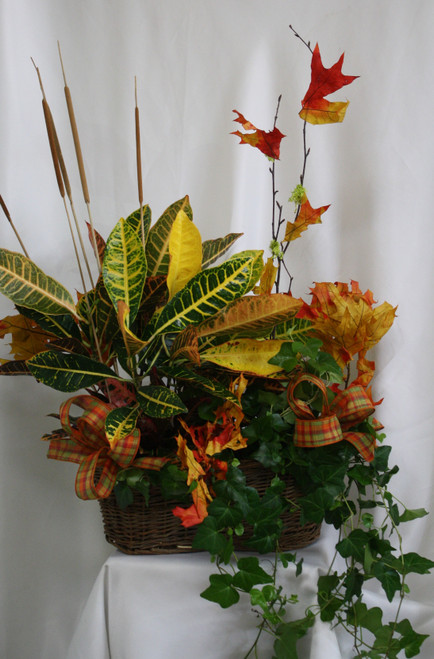 """Fall Croton and Green Plant Double Basket from Enchanted Florist. A festively fall double basket that will include a fall croton and a luscious green ivy in a basket decorated with fall leaves, matching ribbons, and mini cattails.  Approximately 26""""H x 22""""W SKU RM464"""