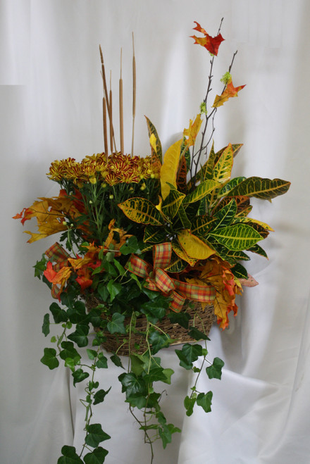 """Autumn Mum & Croton European Garden Triple Basket from Enchanted Florist. A large triple basket of fall themed plants. The basket of plants will include a fall croton, a fall mum plant, and one green ivy plant decorated with autumn ribbons, mini cattails and fall leaves. Approximately 26""""H x 20""""W SKU RM463"""