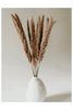 Natural Mini Pampas Grass available in Macon, Georgia