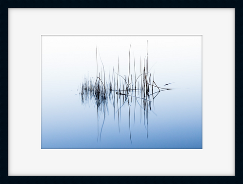 Reeds Reflection