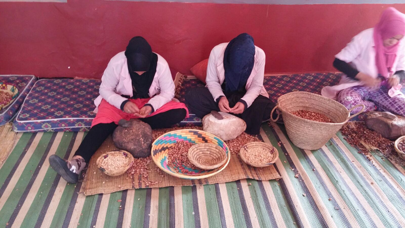 Berber women harvesting and preparing argan nuts to be made into oil
