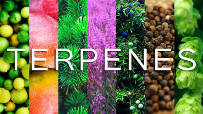 Beauty Of 5: Terpenes Can Help Boost Your Skincare And Wellness Routine