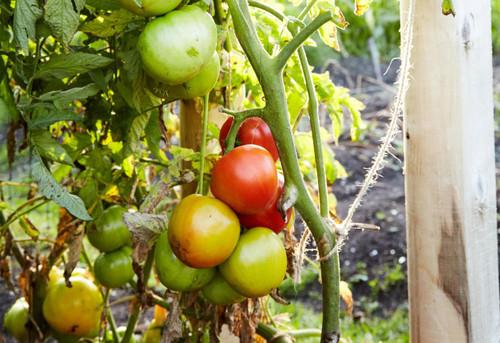 Beginner Vegetable Gardening Made Easy