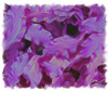 Purple Double Ruffle Ribbon