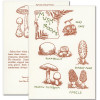 """Saturn Press letterpress All Occasion Card - """"Mushroom Guide."""" Cover shows drawings of edible mushrooms. Back shows drawing of poisonous mushrooms."""