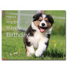 Happy Puppy Birthday Postcard shows a young Border Collie running through a field