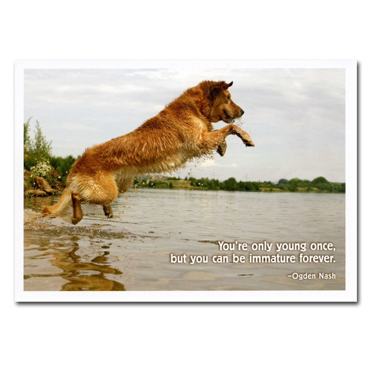 """Boxed Business Birthday Card - Immature Ogden Nash Quotation Cover with photo of dog jumping into water and Ogden Nash quotation """" You're only young once but you can be immature forever!"""""""