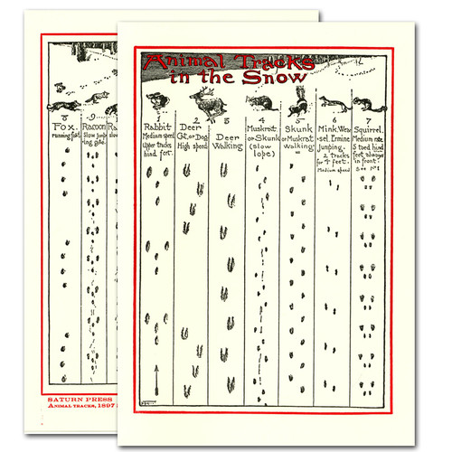 "Saturn Press All Occasion Card ""Animal Tracks"" Cover and back show vintage illustrations of different wild animal tracks in the snow."