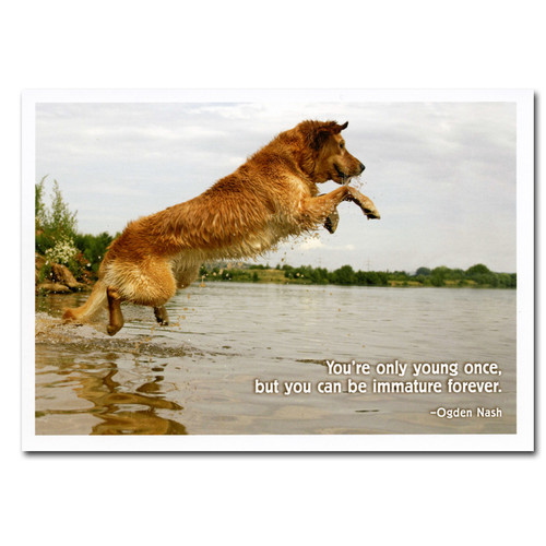 "Boxed Business Birthday Card - Immature Ogden Nash Quotation Cover with photo of dog jumping into water and Ogden Nash quotation "" You're only young once but you can be immature forever!"""