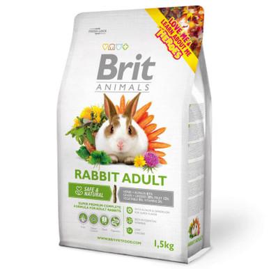 Rabbit Adult