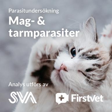 Avföringsprov mag- & tarmparasiter paket katt