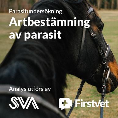 Artbestämning av parasit
