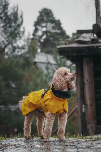 Reflekterande Regnjacka Hund, Gul