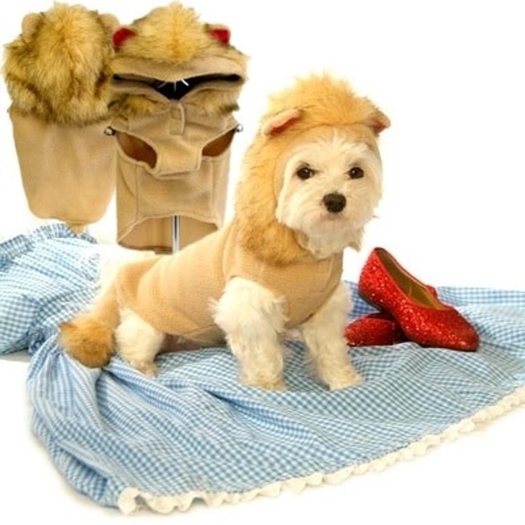 Lion Dog Hoodie