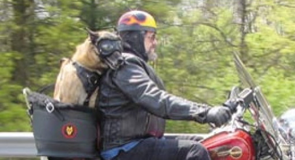 Dog Carrier | Motorcycle Pet Carrier