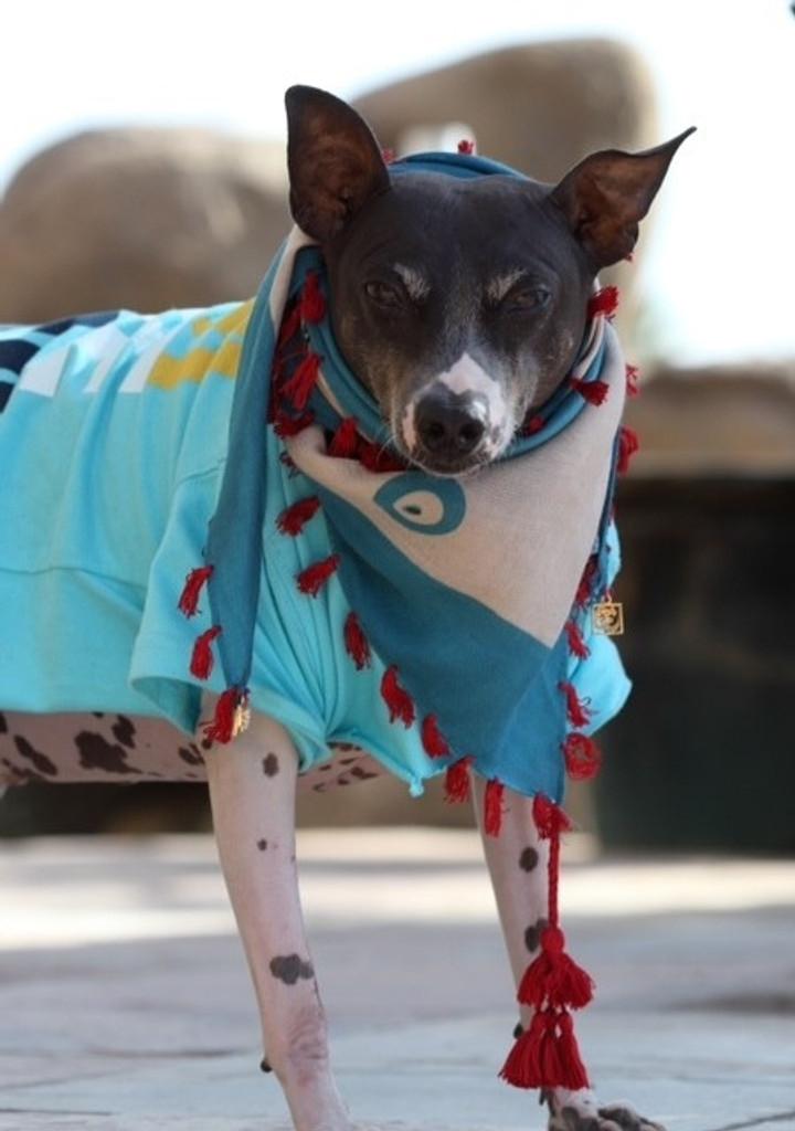 Evil Eye Dog Scarf