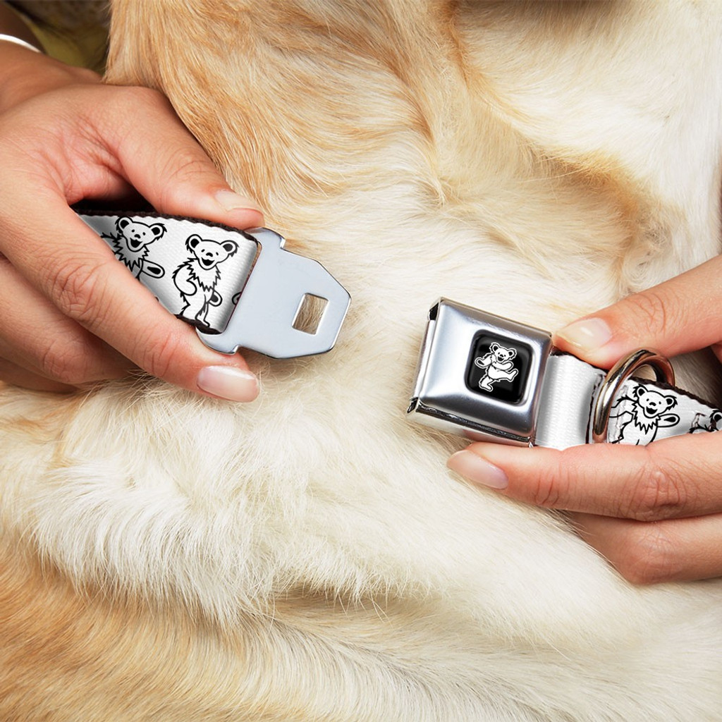 white dancing bears dog collar