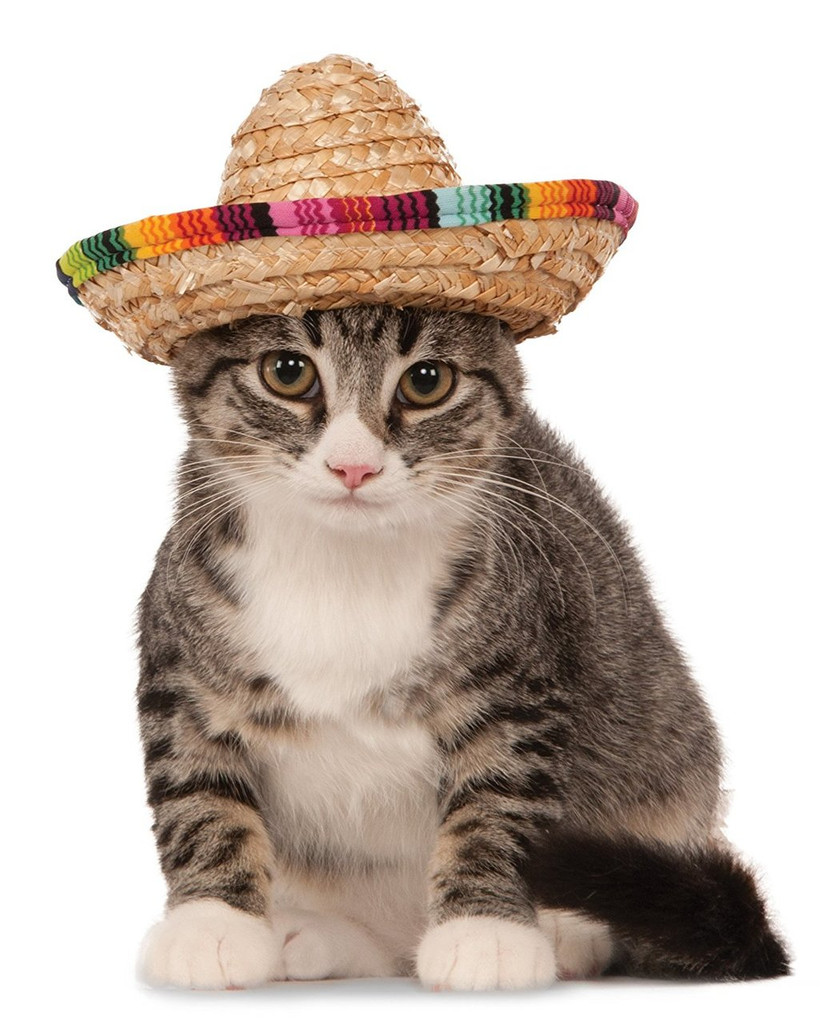 sombrero hat for pets