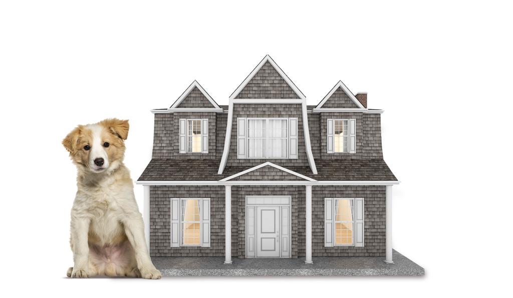 beach house doghouse